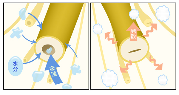 吸湿効果と速乾性のイメージ