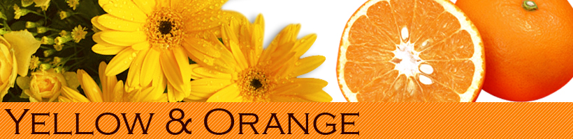 オレンジ&イエロー|橙色&黄色