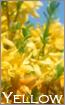 黄色系カーテン特集